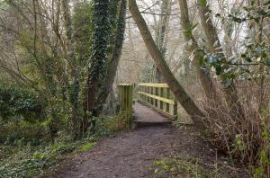 The bridge will be restored and made accessible to all if Train Wood gets enough votes. Picture by Stuart McPherson